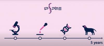iPSpine investiga un tratamiento con células madre para curar el dolor lumbar crónico